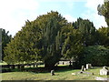 TQ2728 : St Mark, Staplefield: churchyard (5) by Basher Eyre