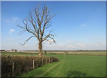 SP8200 : Dead Tree by the Chiltern Way by Des Blenkinsopp
