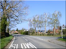 SJ3021 : Contrasting trees in Maesbrook by David Smith