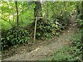 SX3055 : Bridleway below Keveral by Derek Harper