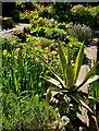 SP1742 : Hidcote flower beds by Paul Harrop