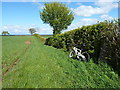 SO6687 : Along the hedgeline on Overton Hill by Richard Law