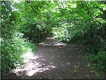 TQ2282 : Woodland path, Wormwood Scrubs by David Hawgood