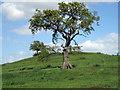 SJ4640 : Eglwys Cross Motte (Mount Cop Castle) by Jeff Buck