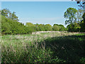 SU8971 : Rough pasture, Winkfield by Alan Hunt