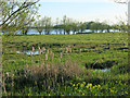 TL3570 : Ferry Lagoon, Fen Drayton Lakes by Hugh Venables