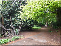 NZ2567 : Path, Jesmond Dene by Paul Gillett