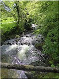 SX5994 : East Okement River on edge of Simmons Park by David Smith
