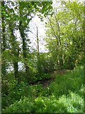 SX5994 : Overgrown mill leat by Tarka Trail, Okehampton by David Smith