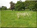 TQ1478 : Flowers in Osterley Park by Paul Gillett