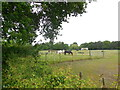 TQ1477 : Horses by Osterley Park by Paul Gillett