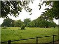 TQ1477 : Field at Osterley Park by Paul Gillett
