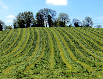 H9642 : New mown hay by Robert Ashby
