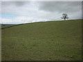 NY5823 : Pastureland near Akeygate by Karl and Ali