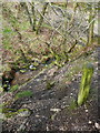 SE0722 : Elland FP80 dropping down to Maple Dean Clough, Greetland by Humphrey Bolton