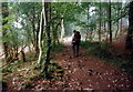 ST5498 : Coed Worgan's Wood by Alan Richards
