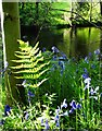 SK2479 : By The River Derwent in late Springtime by Neil Theasby