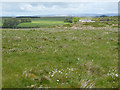 NY6059 : Cotton grass on Tarnhouse Rigg by Oliver Dixon