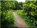 SE1327 : Path in Jagger Park Wood, North Bierley by Humphrey Bolton