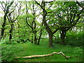 SE1328 : Trees in Jagger Park Wood, North Bierley by Humphrey Bolton