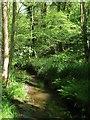 TQ3331 : Ardingly Brook by Simon Carey