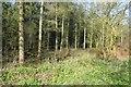 ST2213 : Woodland off Ander's Lane by Richard Webb