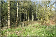 ST2213 : Woodland off Ander's Lane by Richard Webb