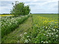 TL3275 : Recently mowed footpath near Woodhurst by Richard Humphrey