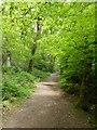 SS9128 : Exe Valley Way in Burridge Woods by David Smith