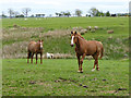 NZ0583 : Two horses at Middleton South by Oliver Dixon