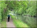 TQ0587 : Grand Union Canal near Denham by David Hawgood