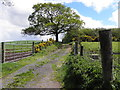 H5672 : Lane, Mullaghslin Glebe by Kenneth  Allen