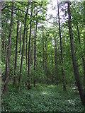 NZ3544 : Hetton Hill Wood by JThomas