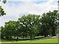 SU9972 : Magna Carta oaks (1) by Stephen Craven