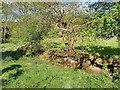 NZ8102 : Ruins of Fulling Mill by Mick Garratt