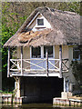 SU6975 : Goose nesting in thatched roof of boathouse by Rose and Trev Clough