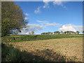 SX3472 : Farmland near Kelly Bray by Des Blenkinsopp