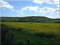 NZ3244 : Oilseed rape crop off Pittington Lane by JThomas