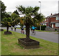SU3521 : Two exotic trees and four cyclists in Romsey by Jaggery