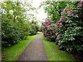 NX4745 : Rhododendron--lined path in the grounds of Galloway House by Oliver Dixon