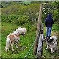 SM8614 : Footpath Near Haroldston Cottages by Deborah Tilley