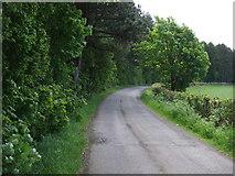 NZ3544 : Road to Elemore School by JThomas