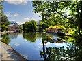 TQ3183 : Regent's Canal by David Dixon