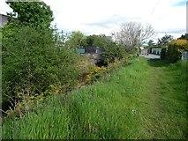 SH5639 : Public footpath alongside Y Cyt / The Cut by Christine Johnstone