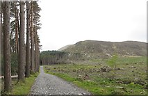 J3629 : Cut-over forest at the foot of Slievenamaddy by Eric Jones