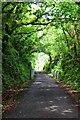 SW9773 : Green Tunnel by John Myers