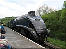 SE8394 : Sir  Nigel  Gresley  passing  Newton  Dale  Halt by Martin Dawes