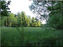 TM2743 : Water meadow at Newbourne Springs by Chris Holifield