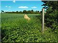 TQ6399 : Public footpath at Fryerning, Essex by Malc McDonald