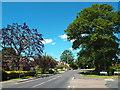 TQ5899 : Hook End Road, near Doddinghurst by Malc McDonald